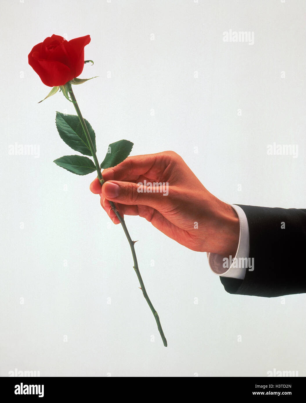 Man, detail, hand, rose, red, copy space, love, present
