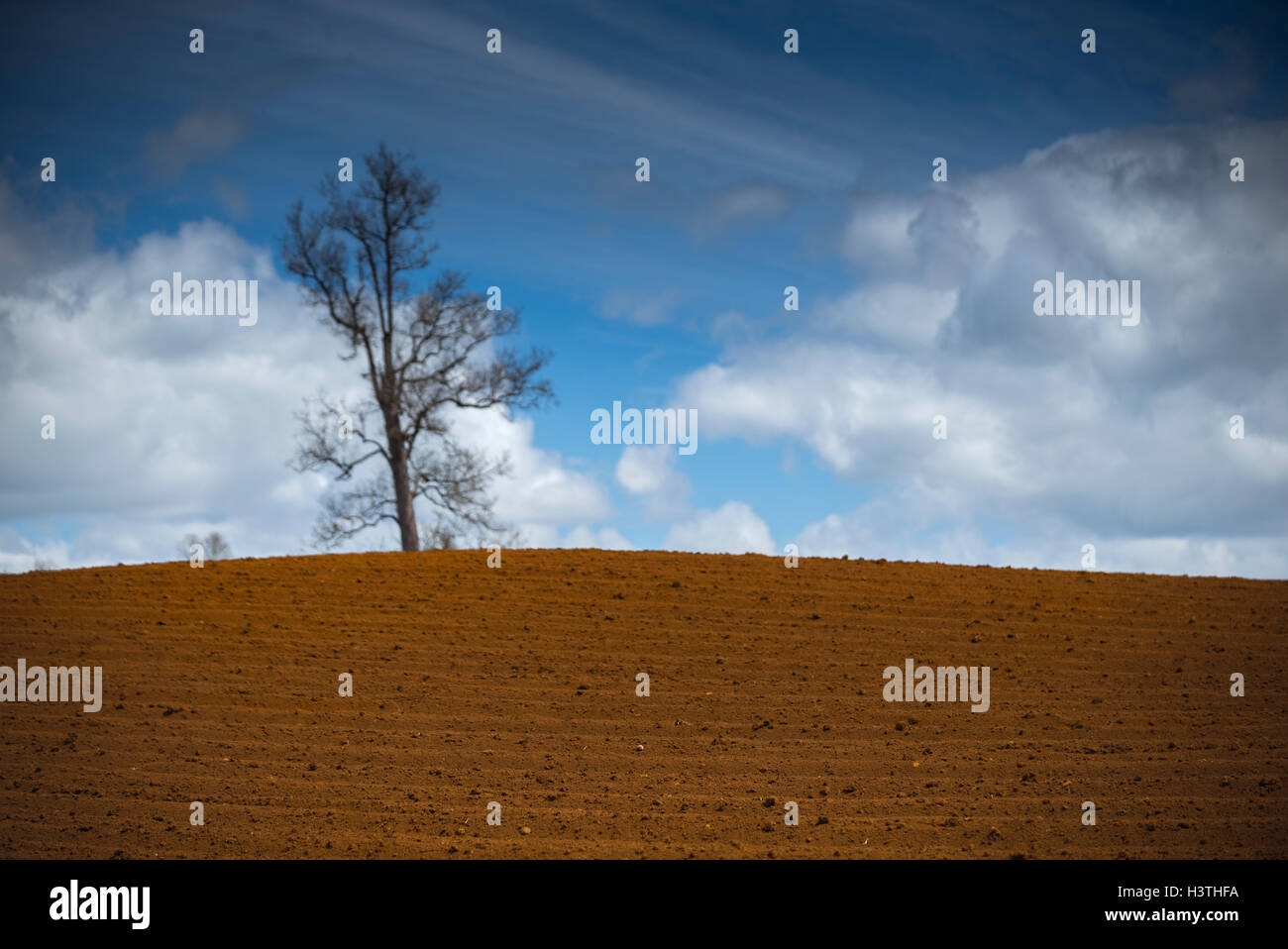 Land to grow. Osorno, Tha lakes Region, Chile - Stock Image