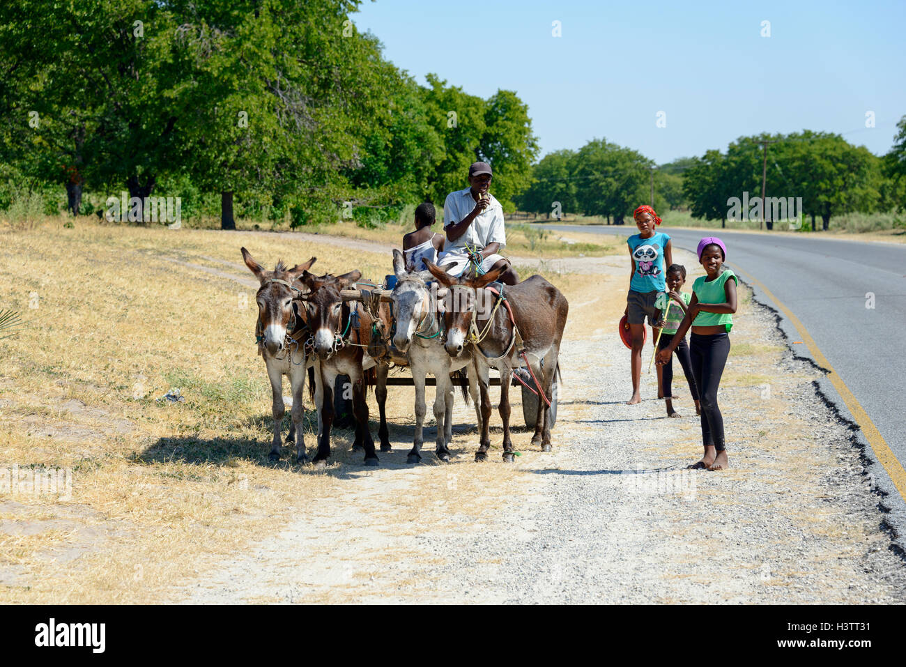 Donkey cart, north of Maun, Botswana - Stock Image