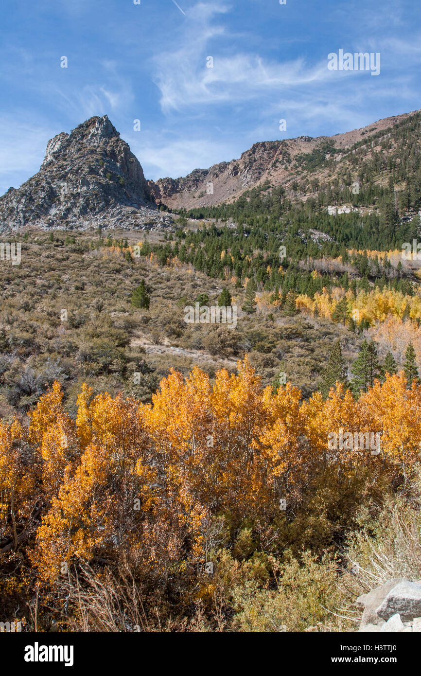Fall colors on the east side of The Sierras, going up Tioga Pass near Lee Vining and Mono Lake in California. Stock Photo