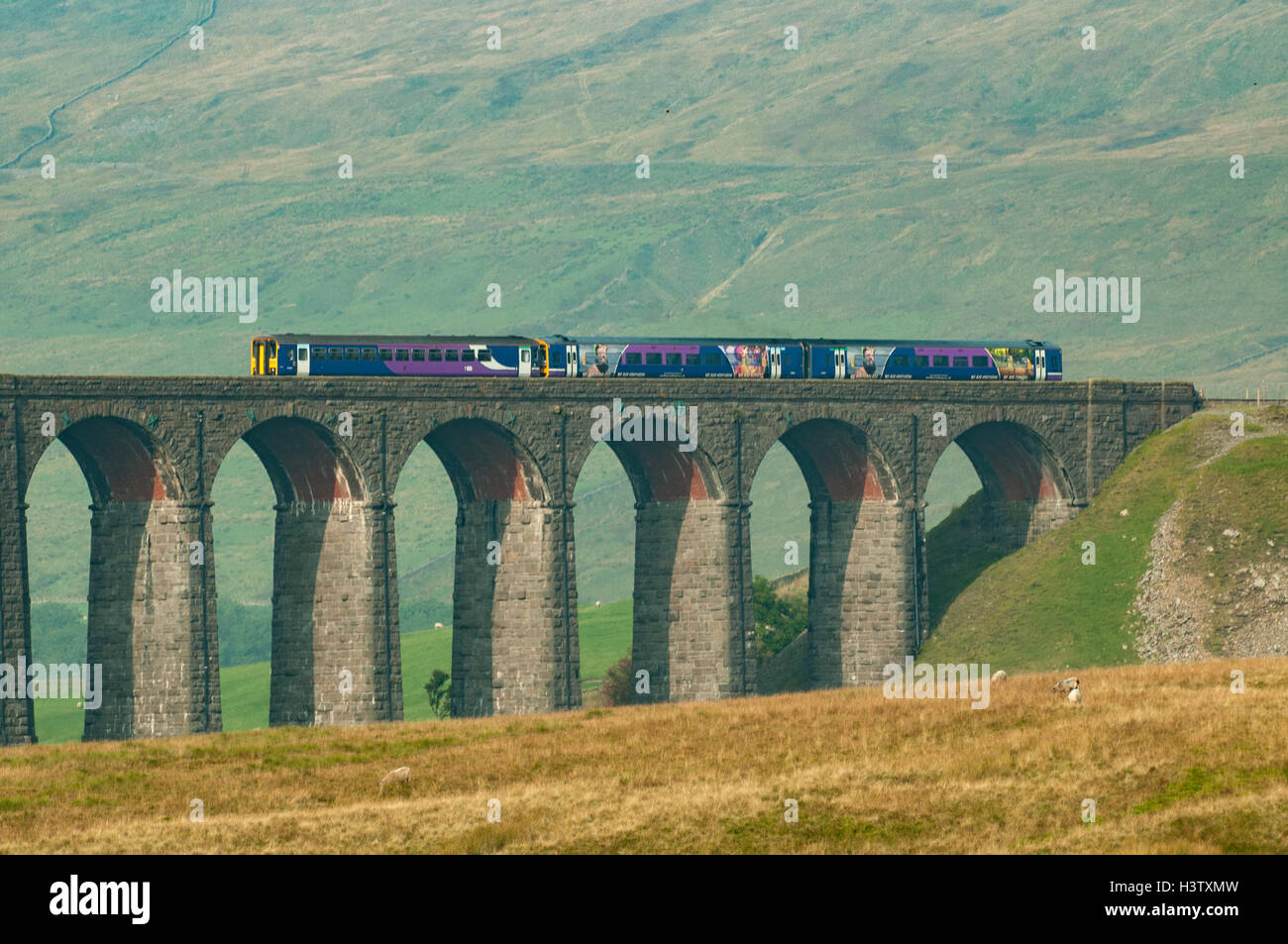 Train on Ribblehead Viaduct, Yorkshire, England - Stock Image