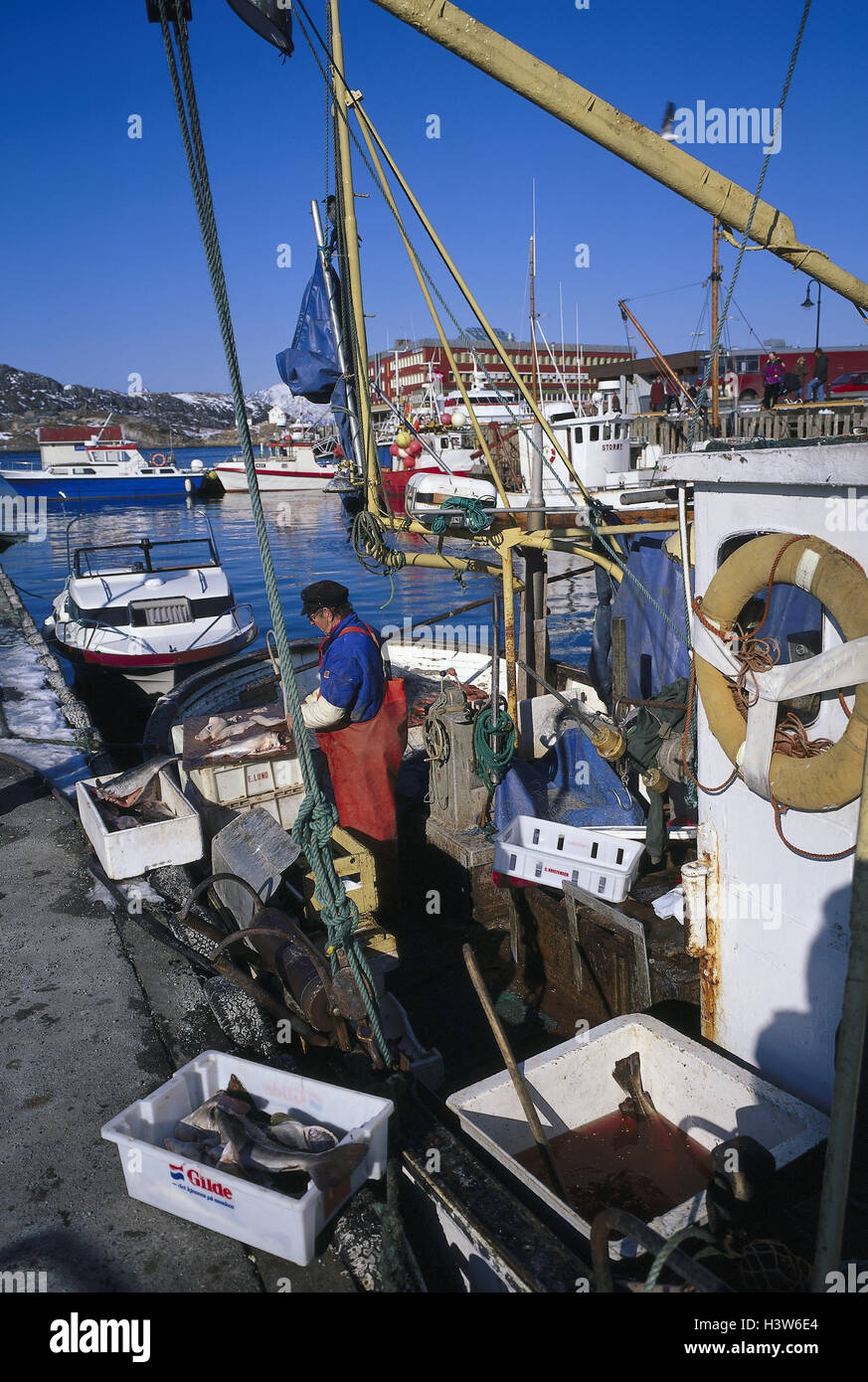 Norway, Bodö, harbour, fisherman, catch, edit, Europe, harbour view, fishing trawler, fishing, fish, exclude, - Stock Image