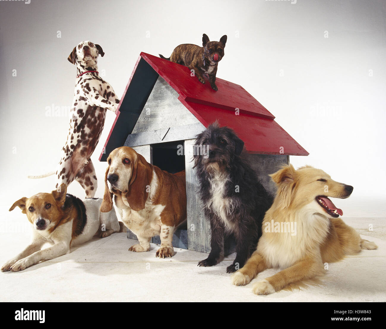 Dogs, different, kennel mammals, doggy, Canidae, pets, dogs, six, differently, pedigree dogs, hybrids, hybrid dogs, - Stock Image