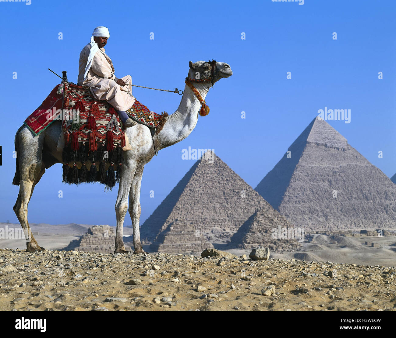 Egypt, Gizeh, pyramids, camel bleeds, outside, Africa, East, Giseh, Gise, Giza, Al-Giza, El-Giseh, pyramids, place - Stock Image
