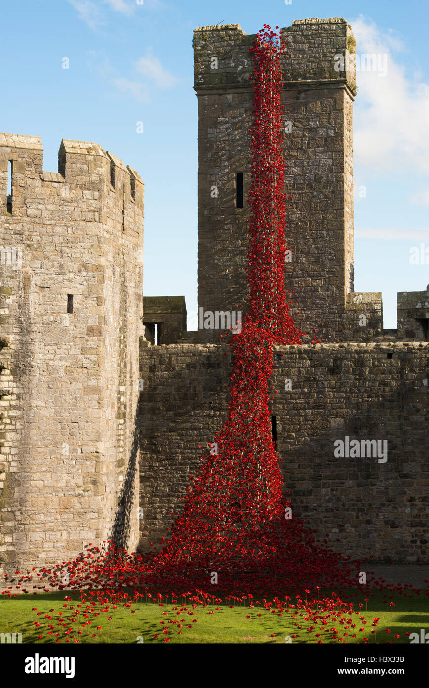 Caernarfon, Wales, UK. 11th October, 2016. A sculpture consisting of thousands of ceramic red poppies marking the Stock Photo