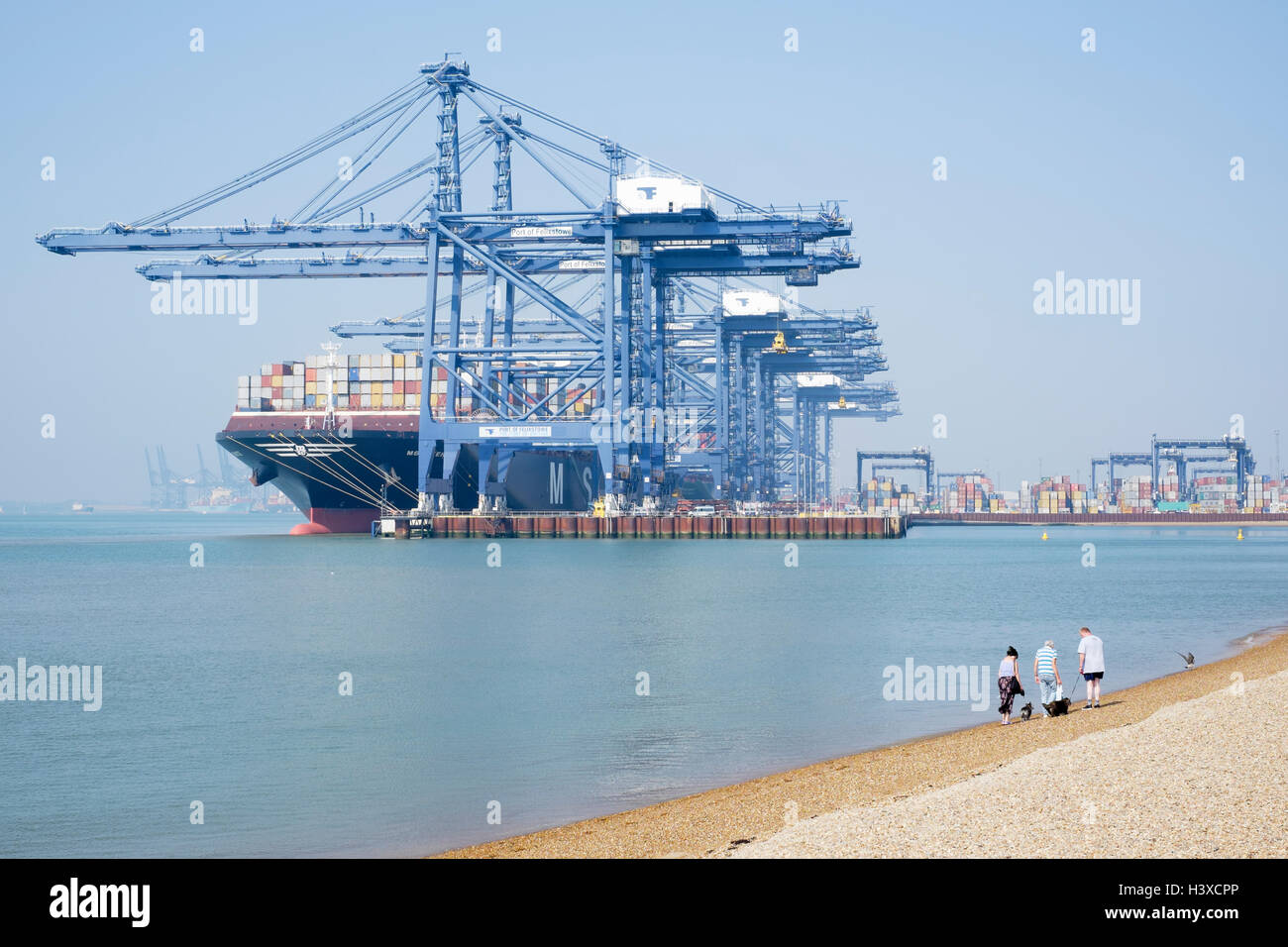 People walk their dogs along the beach with the MSC Venice container ship anchored in the port of Felixstowe in - Stock Image