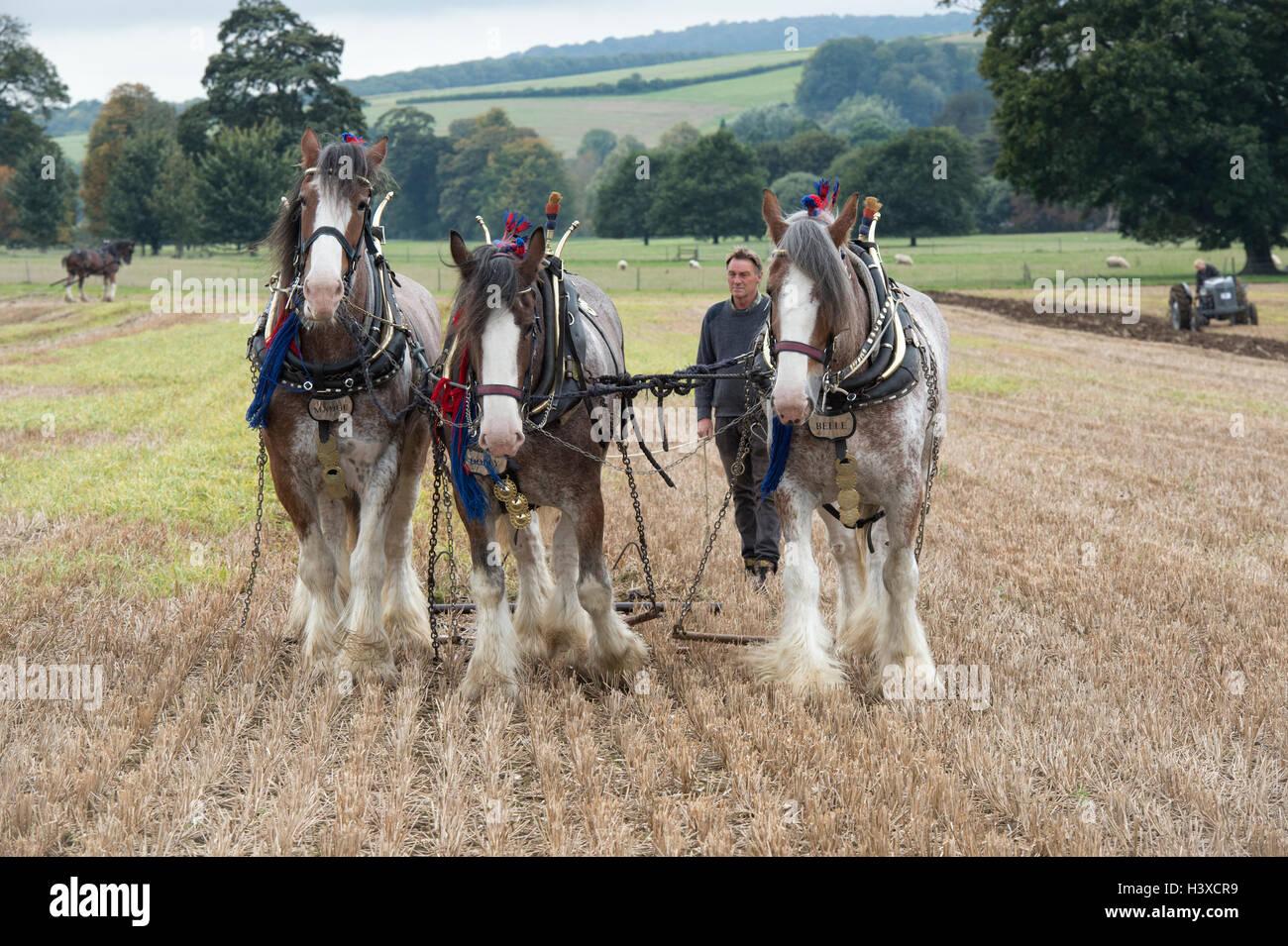 Traditional Harrowing Stock Photos & Traditional Harrowing ...   People Pulling Harrows