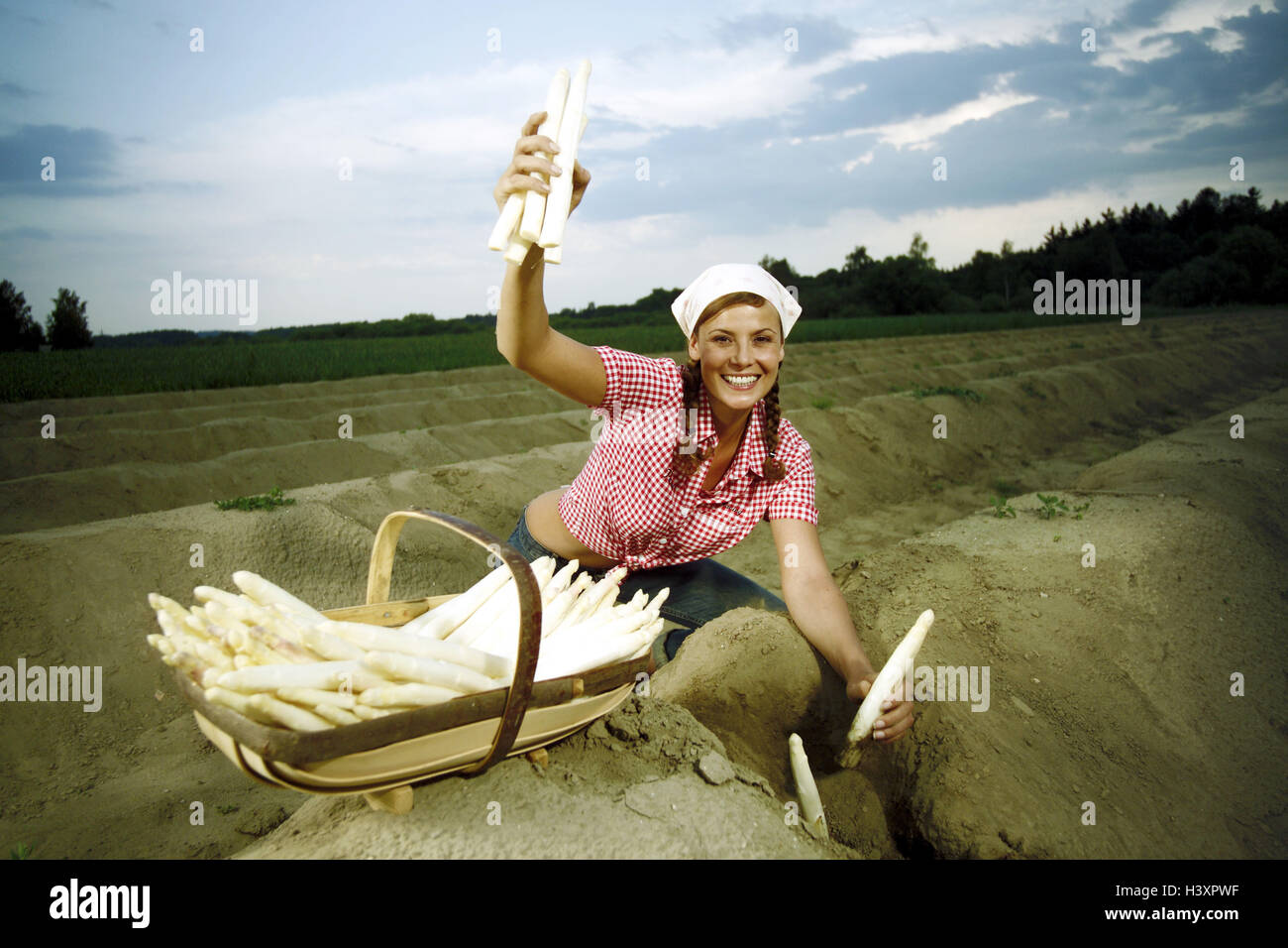 Asparagus field, woman, young, asparagus, harvest field, asparagus cultivation, agriculture, country living, vegetables, Stock Photo