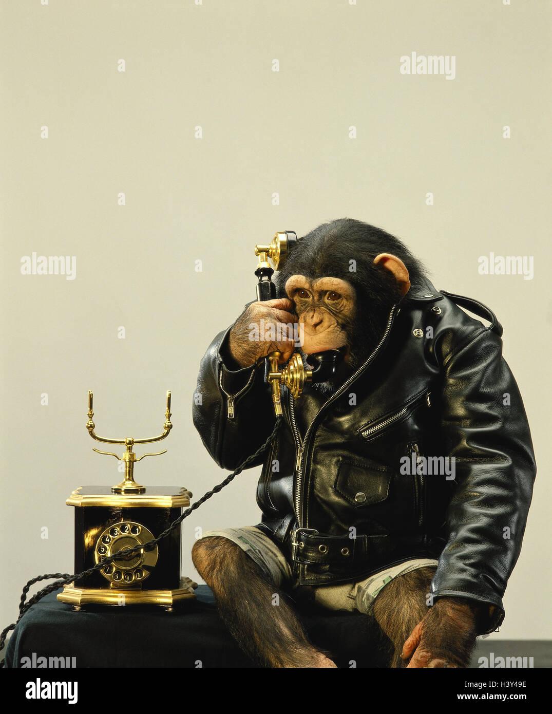 Monkey, leather ball jacket, phone, calls up, - Stock Image