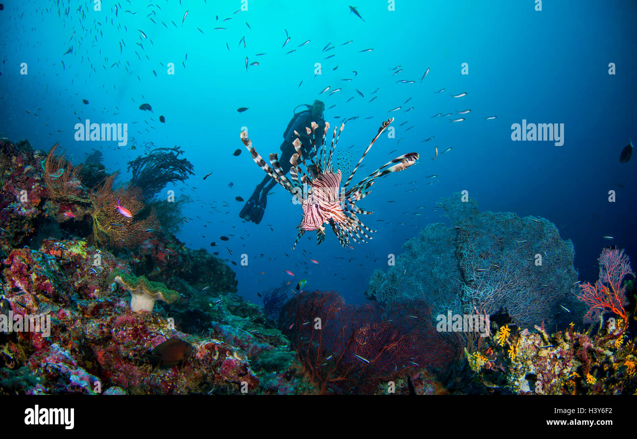 Colorful Tropical Coral reef with lionfish and scuba diver Stock Photo