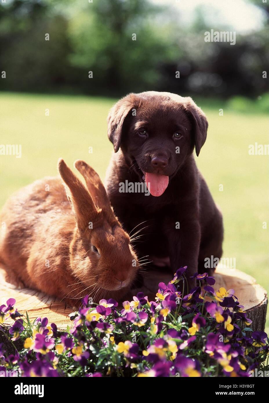 Garden, tree stump, rabbit, Labrador, young, sit, hatchel park, meadow, flowers, animals, pets, hare, Kanickel, - Stock Image