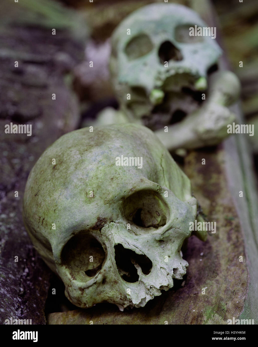 Indonesia, Kete-Kesu, goal nanny's tomb, detail, dead person's skull, South-East Asia, island state, Celebes, - Stock Image