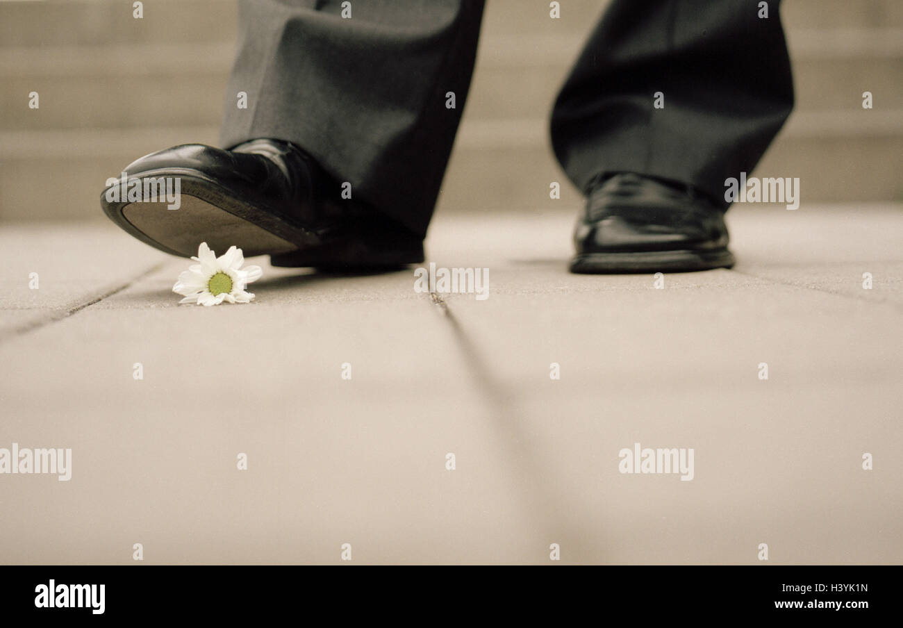 Manager, detail, shoe, blossom, crush, man, feet, shoes, flower, business, toughly, unprincipled, unscrupulousness, - Stock Image