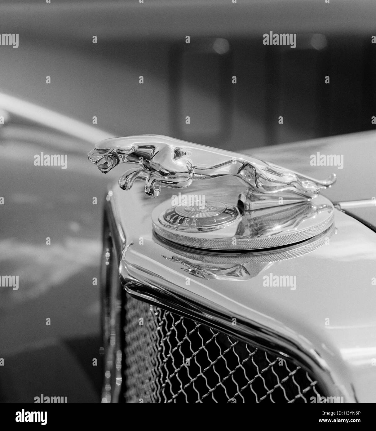 Car Old Timer Jaguar Detail Hood Ornament B W Only Editorially
