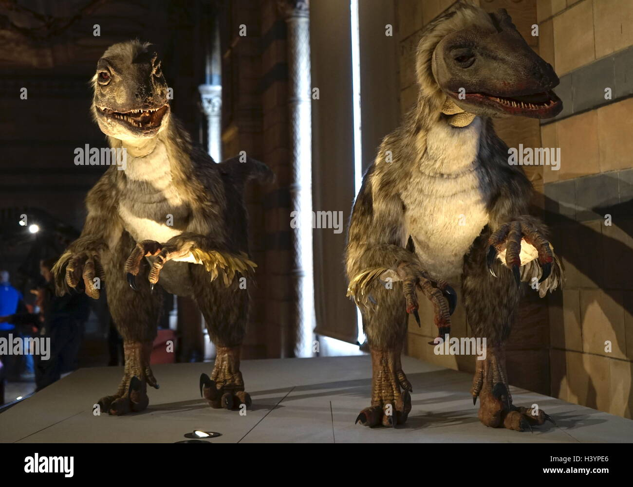 Model of Deinonychus a genus of carnivorous dromaeosaurid coelurosaurian dinosaurs. Dated 21st Century - Stock Image