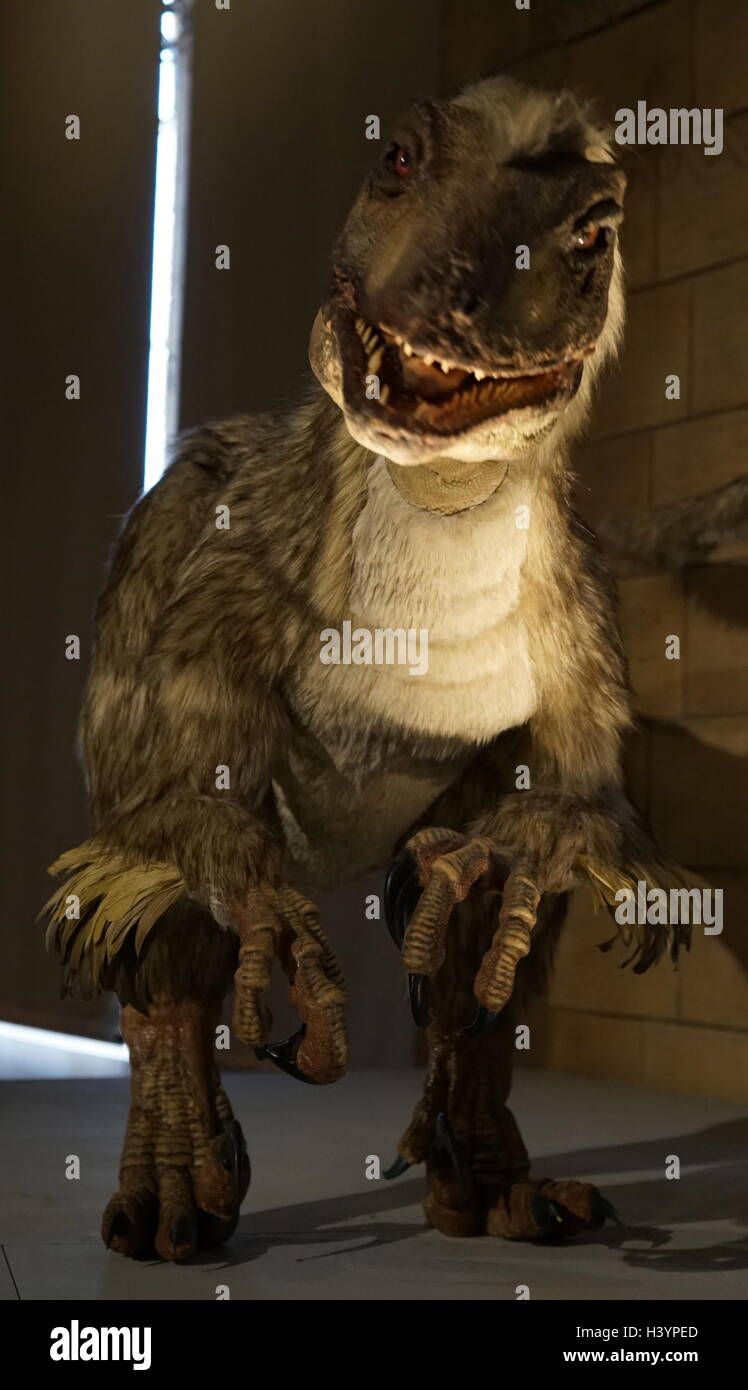 Model of a Deinonychus a genus of carnivorous dromaeosaurid coelurosaurian dinosaurs. Dated 21st Century - Stock Image