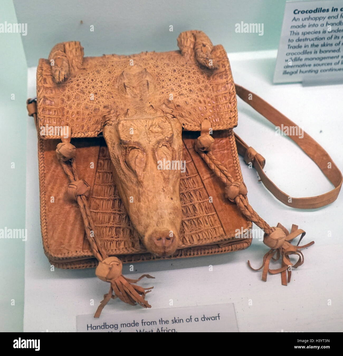 c403860c8 Handbag made from the skin of a dwarf crocodile from West Africa. Dated  20th Century