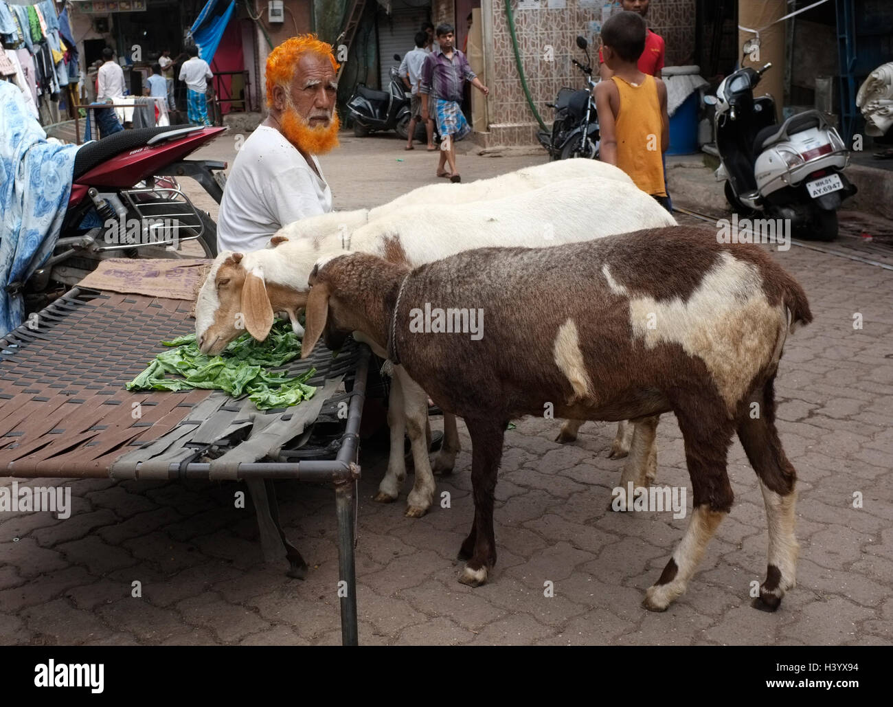 goats eating on the streets if dharavi, with their owner next to them. Street scenes Mumbai, India - Stock Image