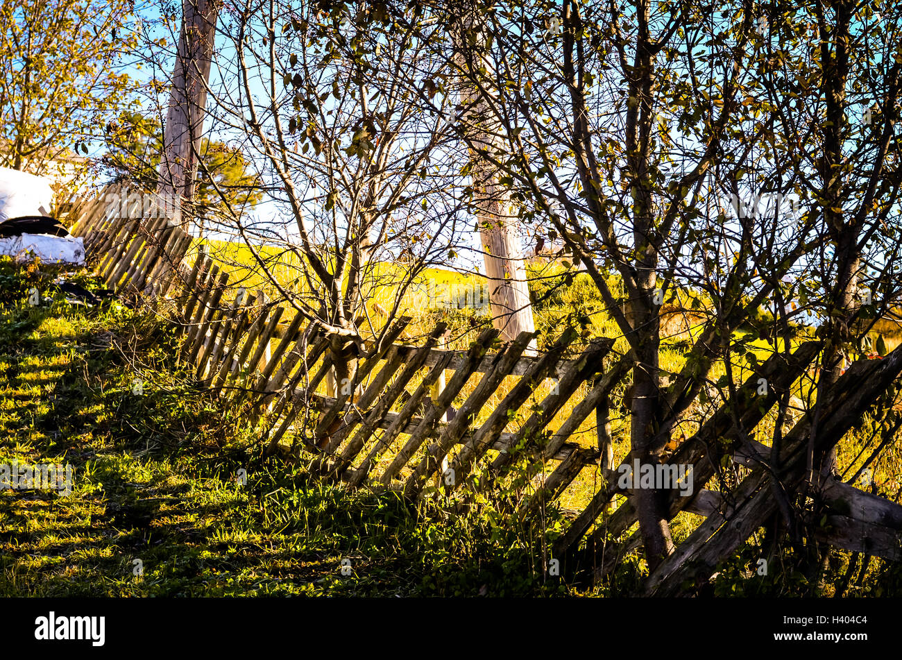 crooked wooden fence in autumn sunlight on meadow - Stock Image