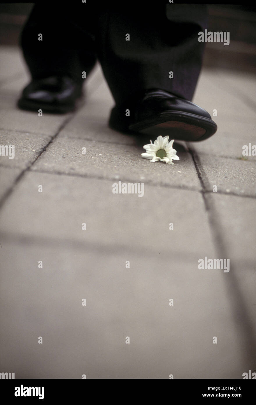 Manager, detail, shoe, blossom, crush, man, Lord's shoe, leather ball shoe, business, toughly, unscrupulousness, - Stock Image