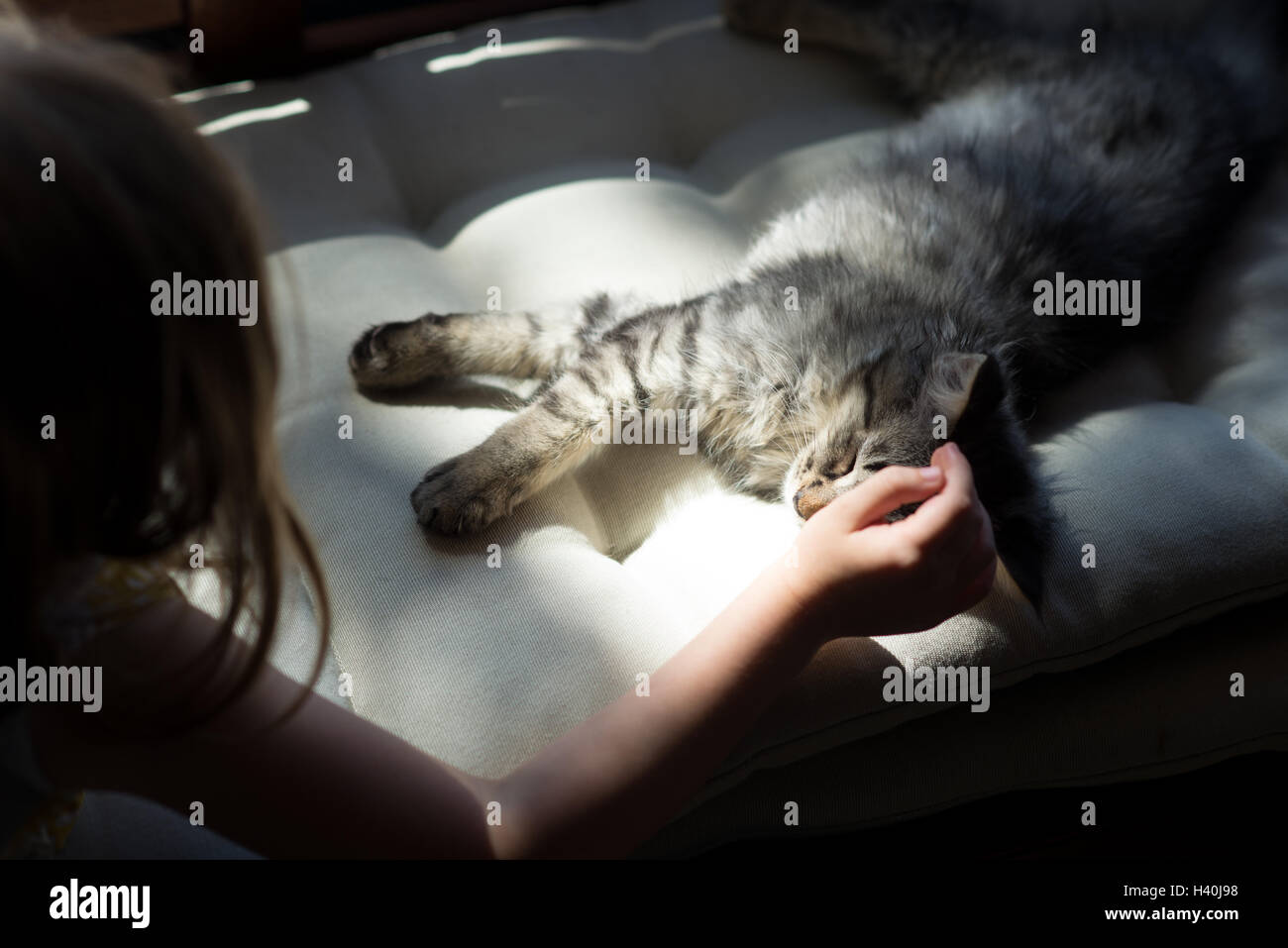 Child's hand petting small tabby kitten in dramatic light lifestyle home photo - Stock Image
