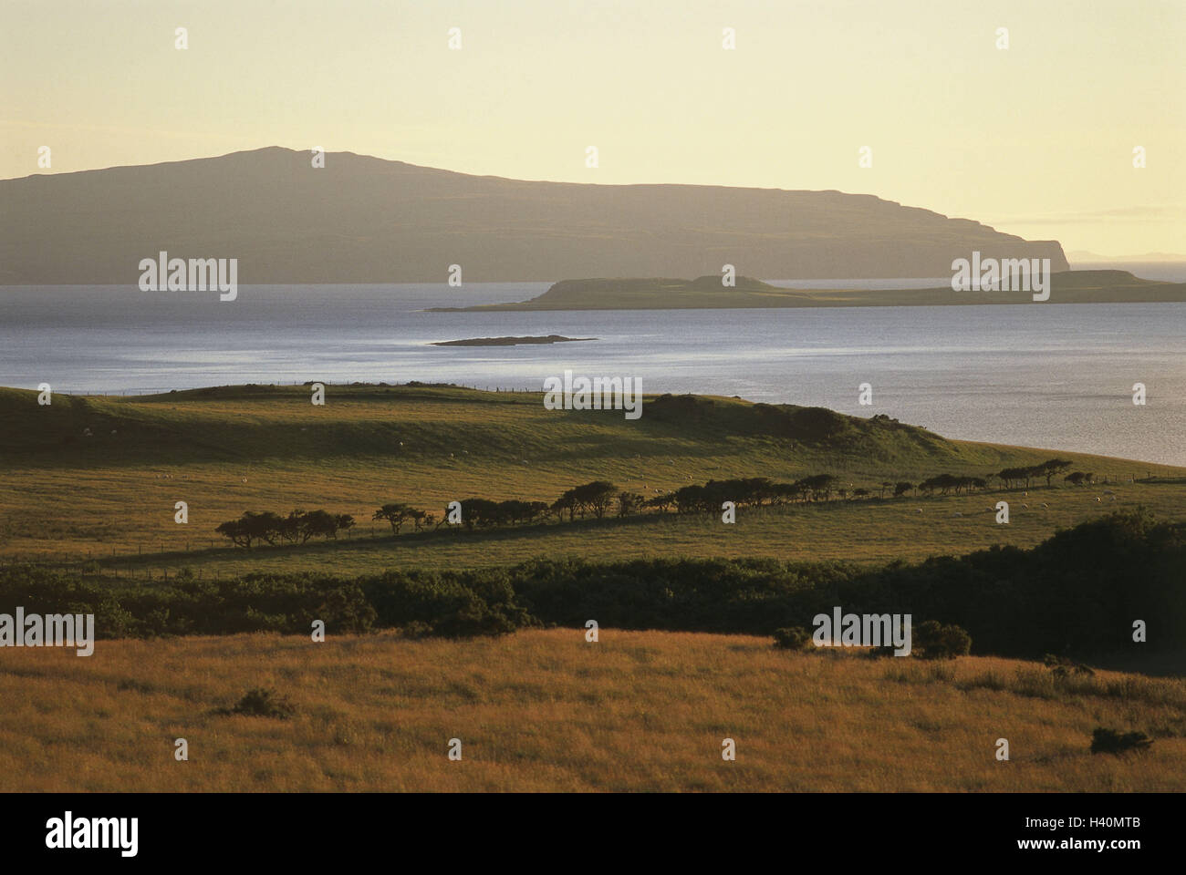 Great Britain, Scotland, island Skye, coast, pastureland, island, north island, island, scenery, morning mood, morning - Stock Image