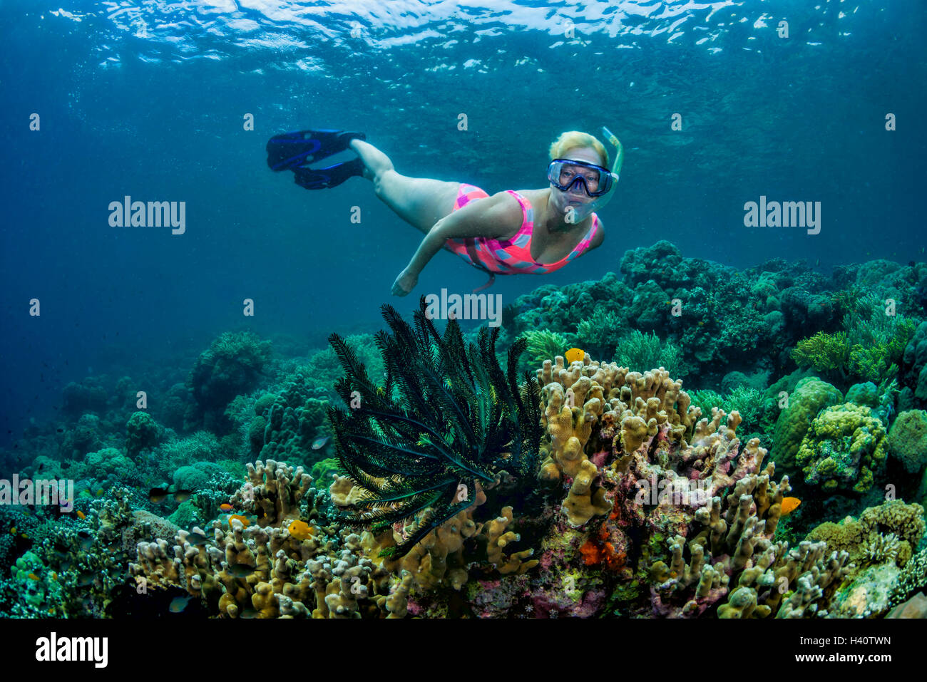 Female snorkel diver exploring tropical coral reef - Stock Image
