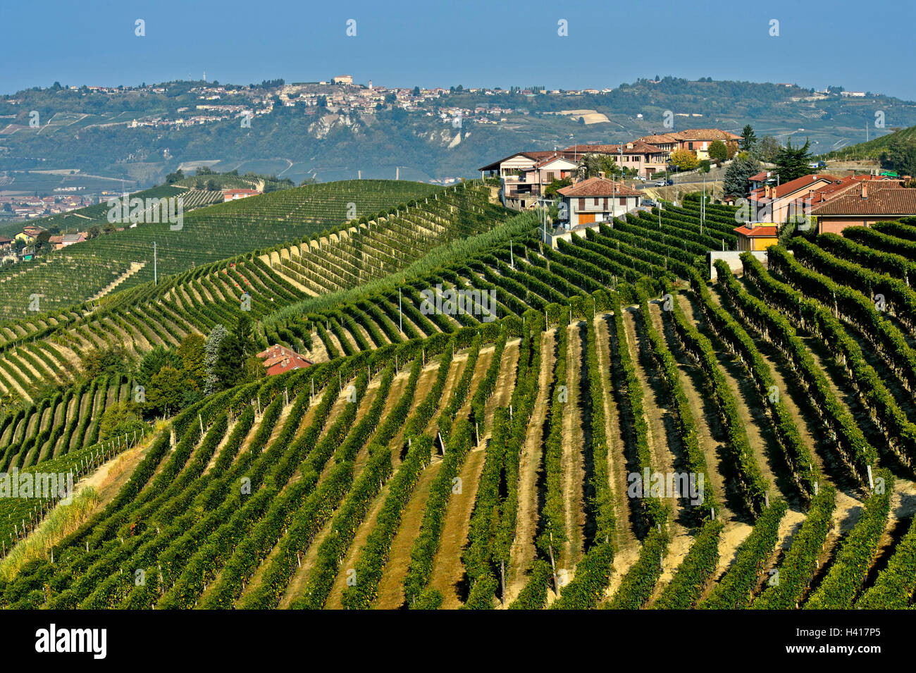 Vineyards of Nebbiolo grapes for Barbaresco red wine on hilltops, Treiso, Piedmont, Italy - Stock Image