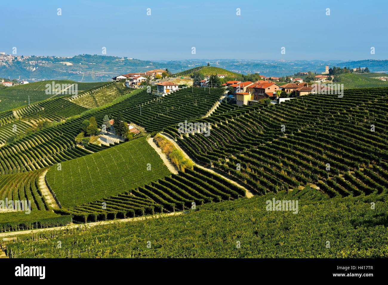 Vineyards of Nebbiolo grapes for Barbaresco red wine in the producing area Treiso-Marcarini, Treiso, Piedmont, Italy - Stock Image