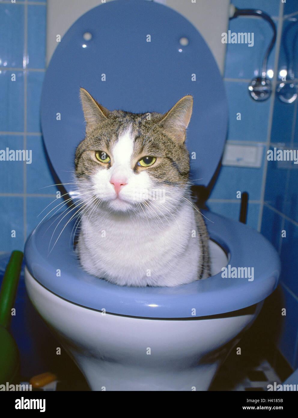 Cat peeing in bathtub