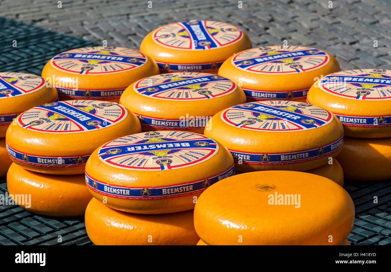 Rounds of Dutch Beemster cheese wheels  at the cheese market of Alkmaar, Netherlands - Stock Image