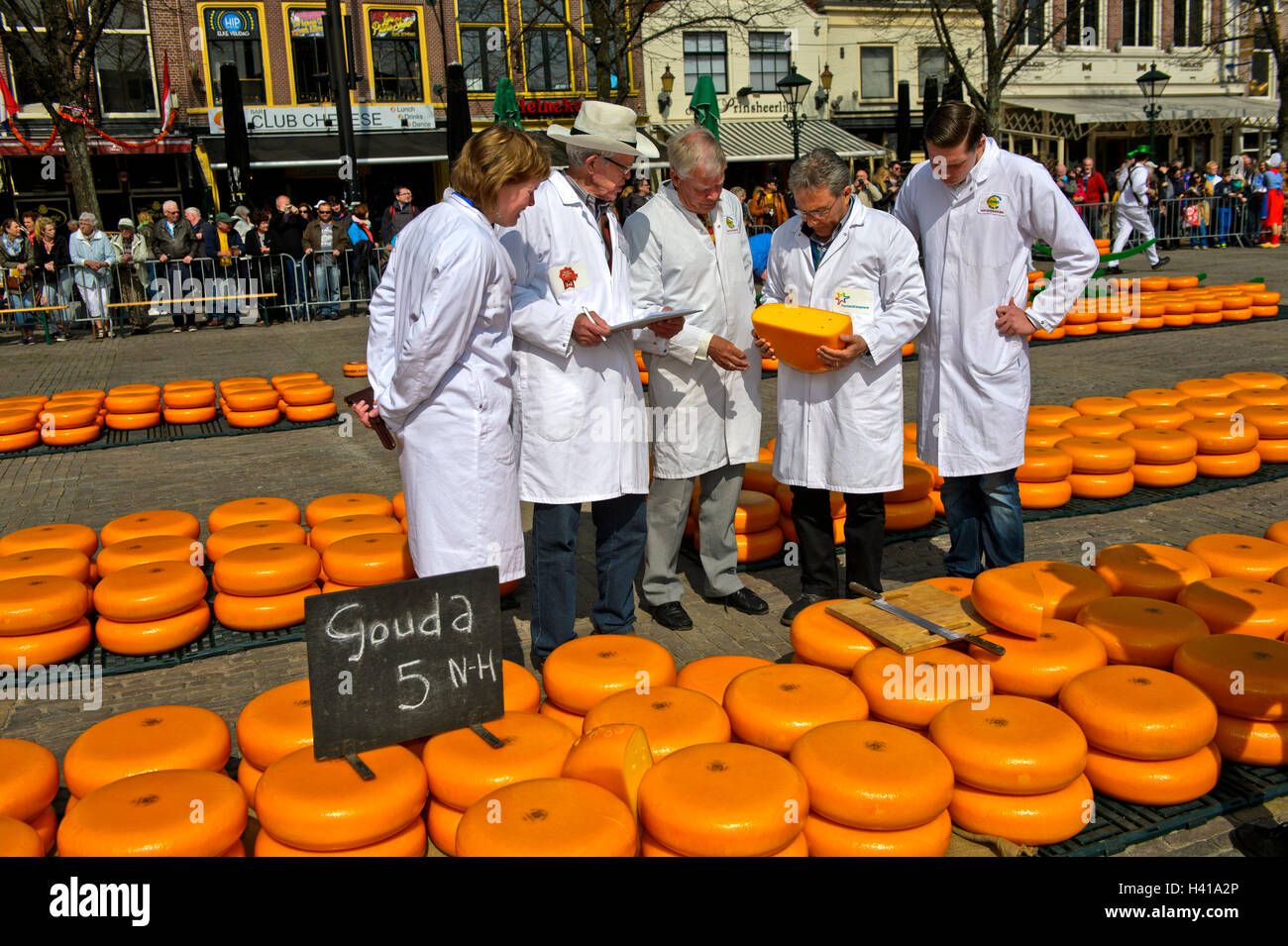 Cheese inspectors examine truckles of Dutch Gouda cheese at the cheese market in Alkmaar, Netherlands - Stock Image