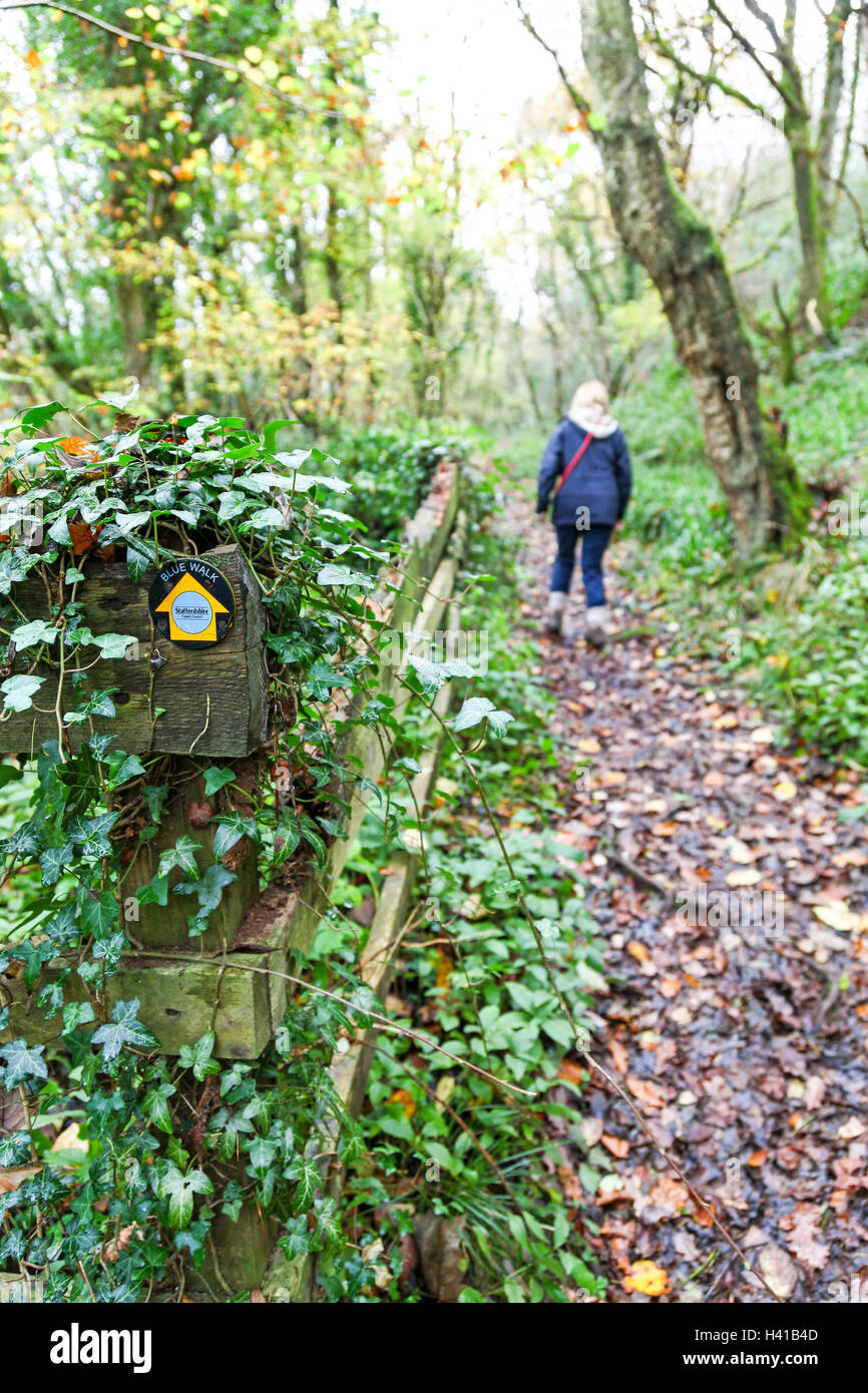 Woman walking along path in autumn called the blue walk set up by Staffordshire County Council Froghall Staffordshire - Stock Image
