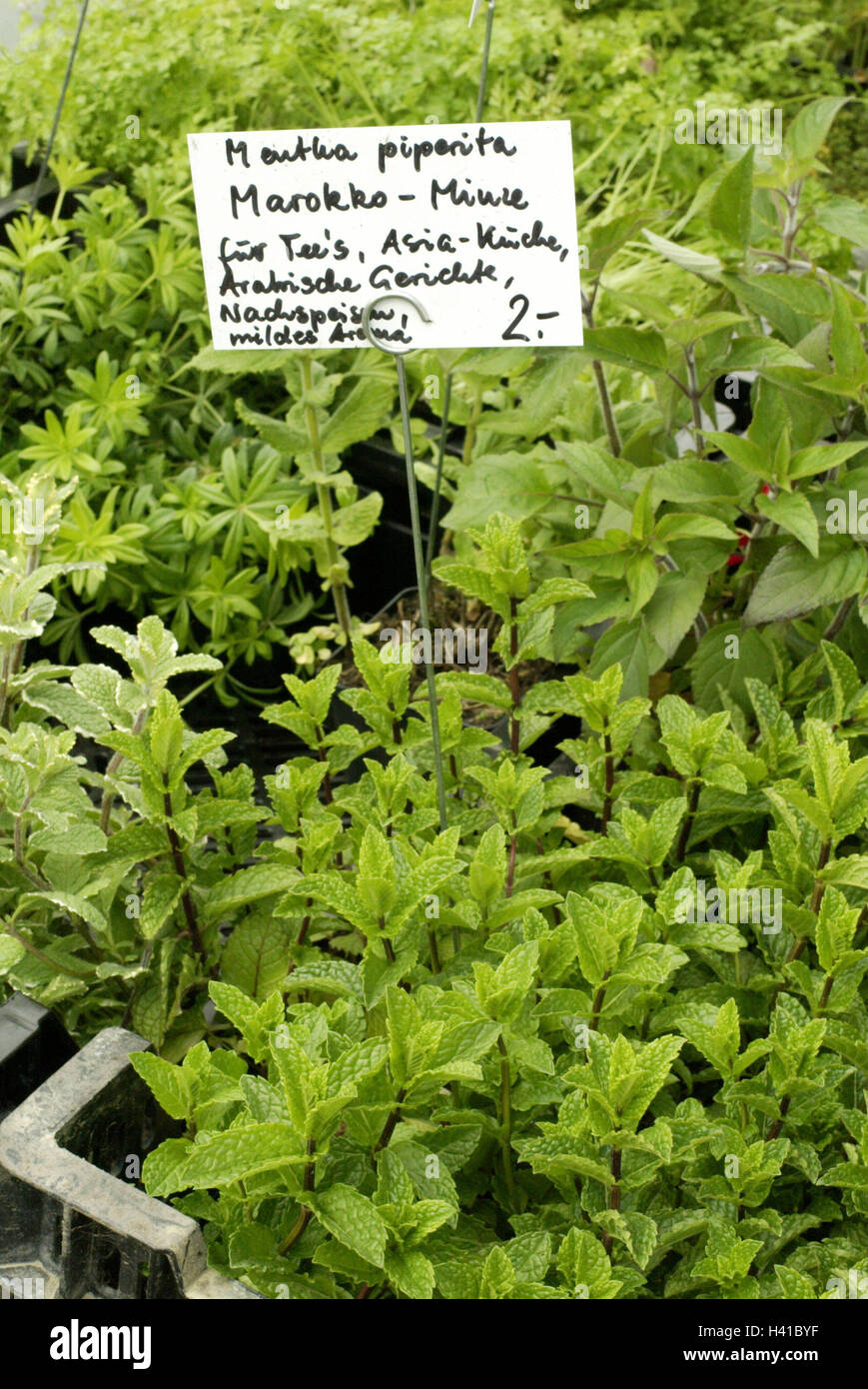 Market Stall Sales Spice Plants Morocco Mint Sign Market Food