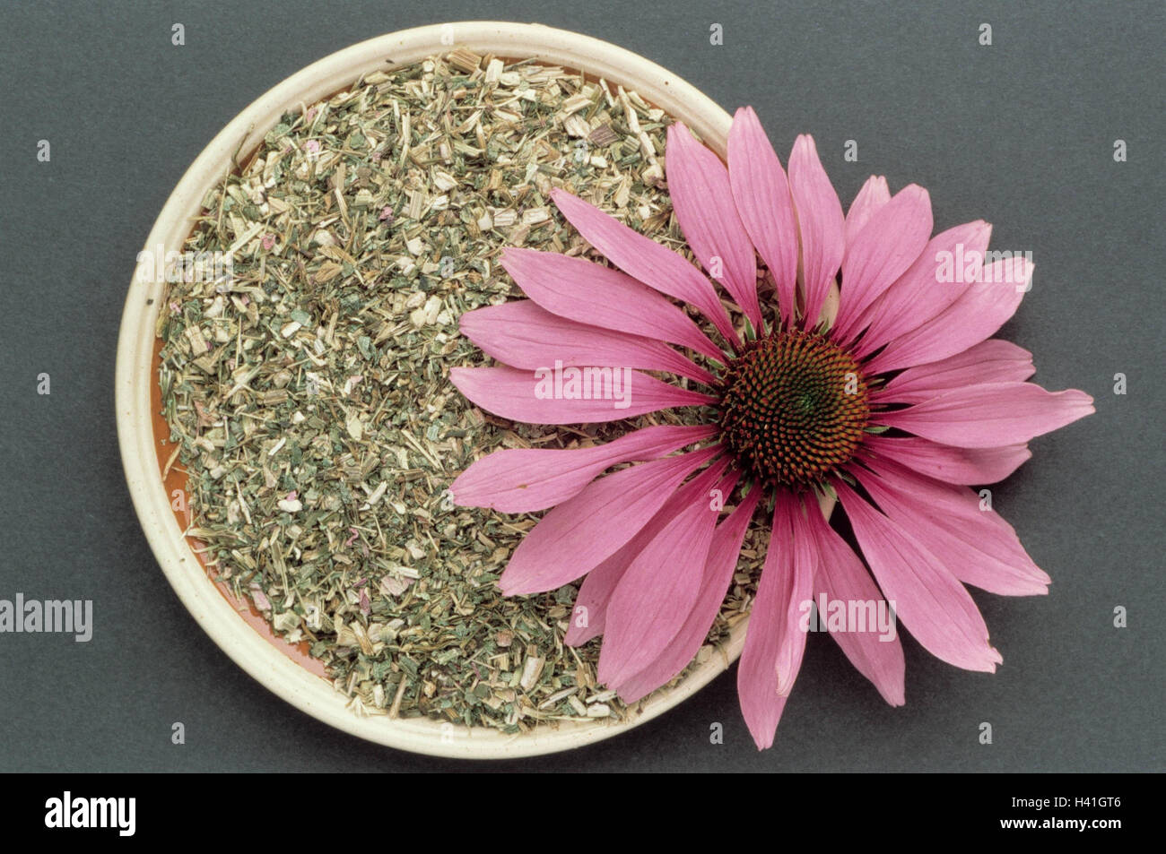 Medicinal plants, red solar hat, Echinacea purpurea, dryly, dished plates, blossom plants, medicinal plants, herbs, - Stock Image