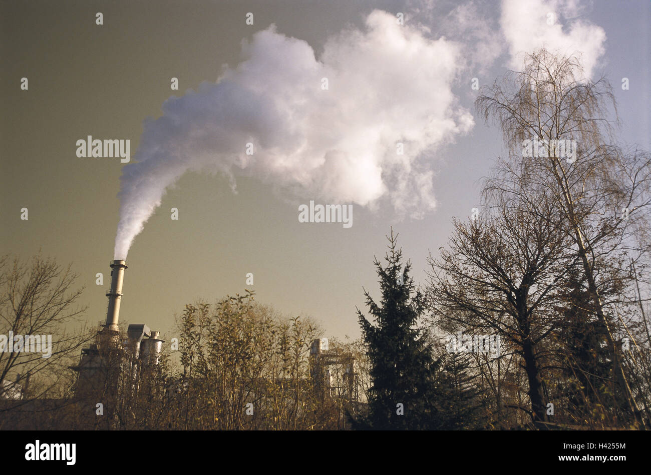 Wood, view, manufacturing plant, detail, chimney, smoke, b/w, factory, factory chimney, Eating, Chimney, smoke, - Stock Image