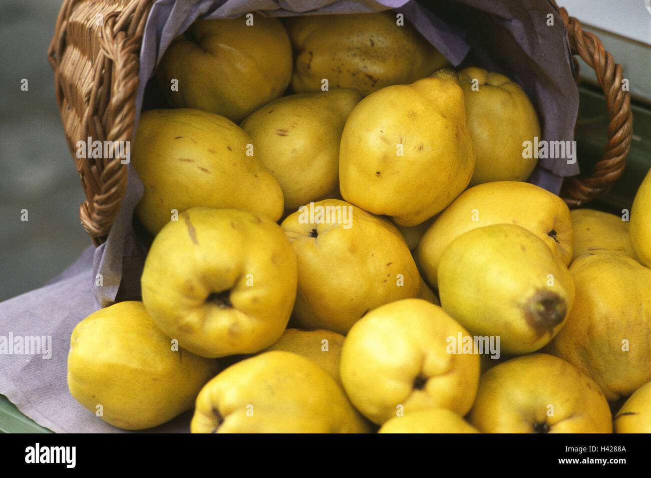 Basket, quinces, Cydonia oblonga, fruit, fruits, autumn fruits, pomes, pear quinces, nutrition healthy, rich in Stock Photo