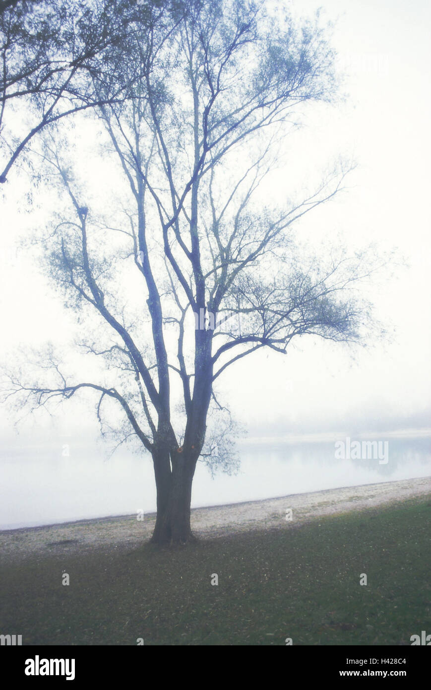 Shores, tree, autumn, fogs,   Waters, sea, shores, tree, deciduous tree, leafless, autumnal, human-empty, silence, - Stock Image