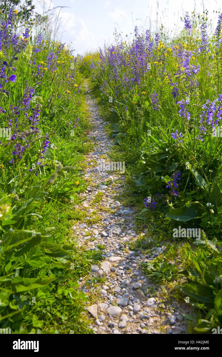 Flower meadow, path, Stock Photo