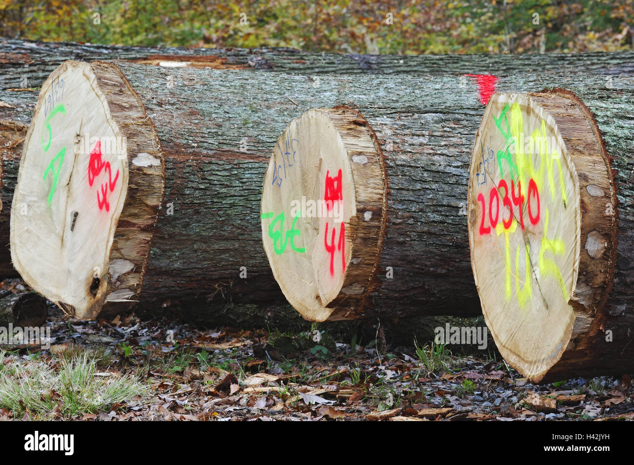 Wood, trees, likes, strains, selected, Bavaria, Spessart, Germany, - Stock Image