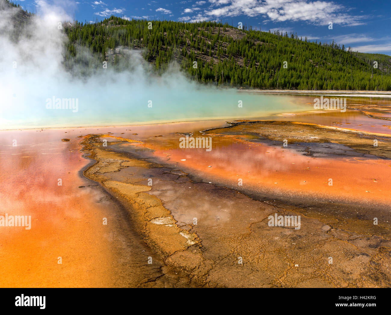 Yellowstone National Park, Wyoming; patterns of orange Thermophiles (algae) in the warm water runoff from Grand - Stock Image