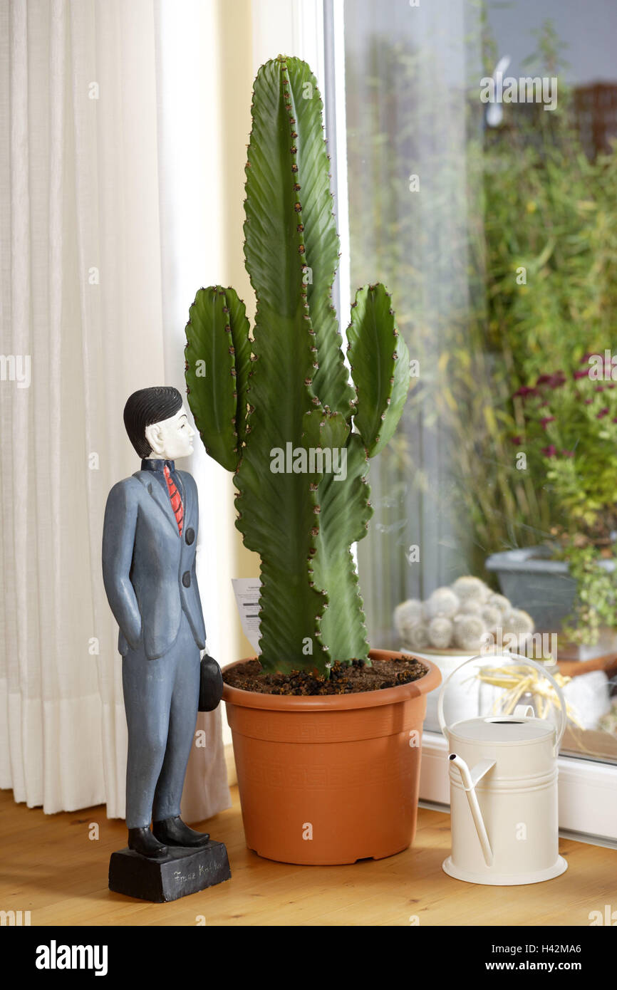 Indoor plants, Euphorbie, Euphorbia spec., floor, plants, ornamental ...