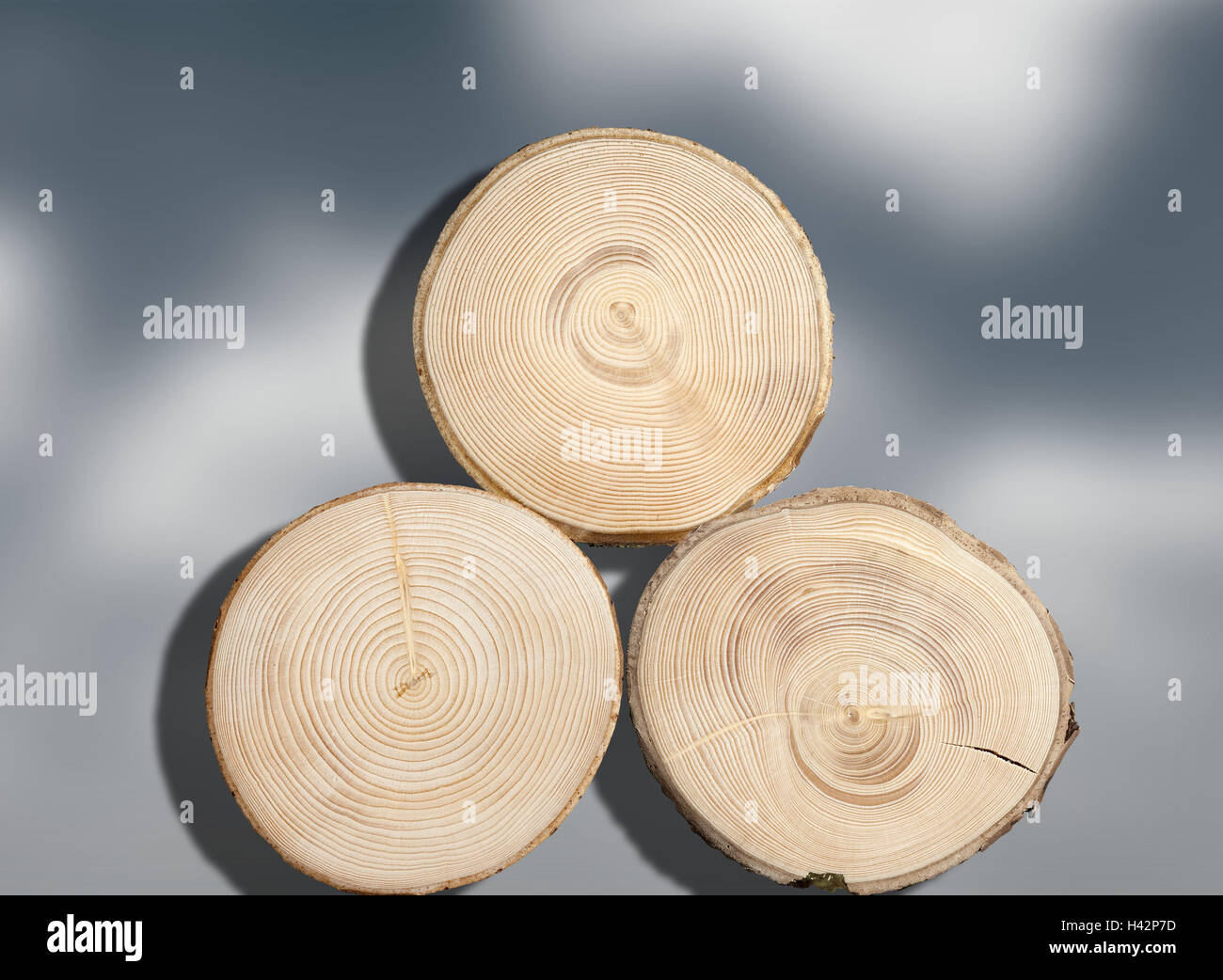 Trunks, three, cross-sectional areas, spruces, trees, strains, cross section, wooden, sample, structure, tree-rings, - Stock Image