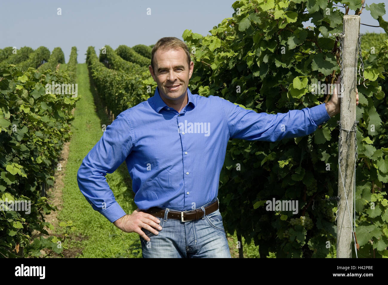 Vineyard, winegrower, satisfaction, person, man, viticulturist, vines, vines, grapes, wine, wine-growing, Önologie, - Stock Image