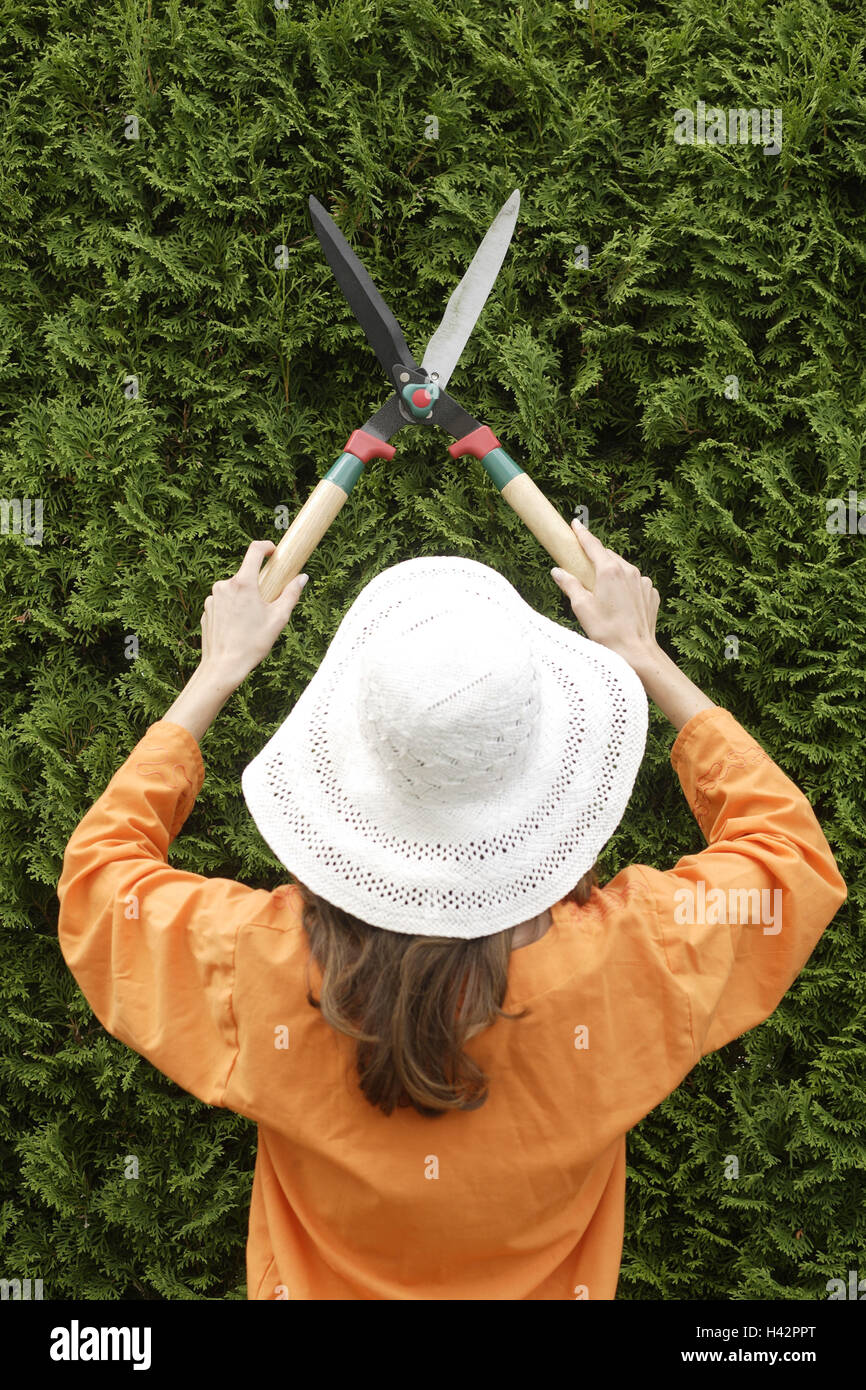 Woman, young, straw hat, hedge, pruning, hedge trimmer, back view, - Stock Image