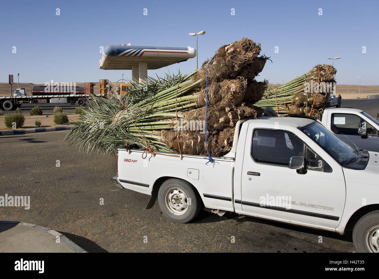 Saudi Arabia, province Tabuk, Pick-up's, loading areas, Palm-Setzlinge, - Stock Image