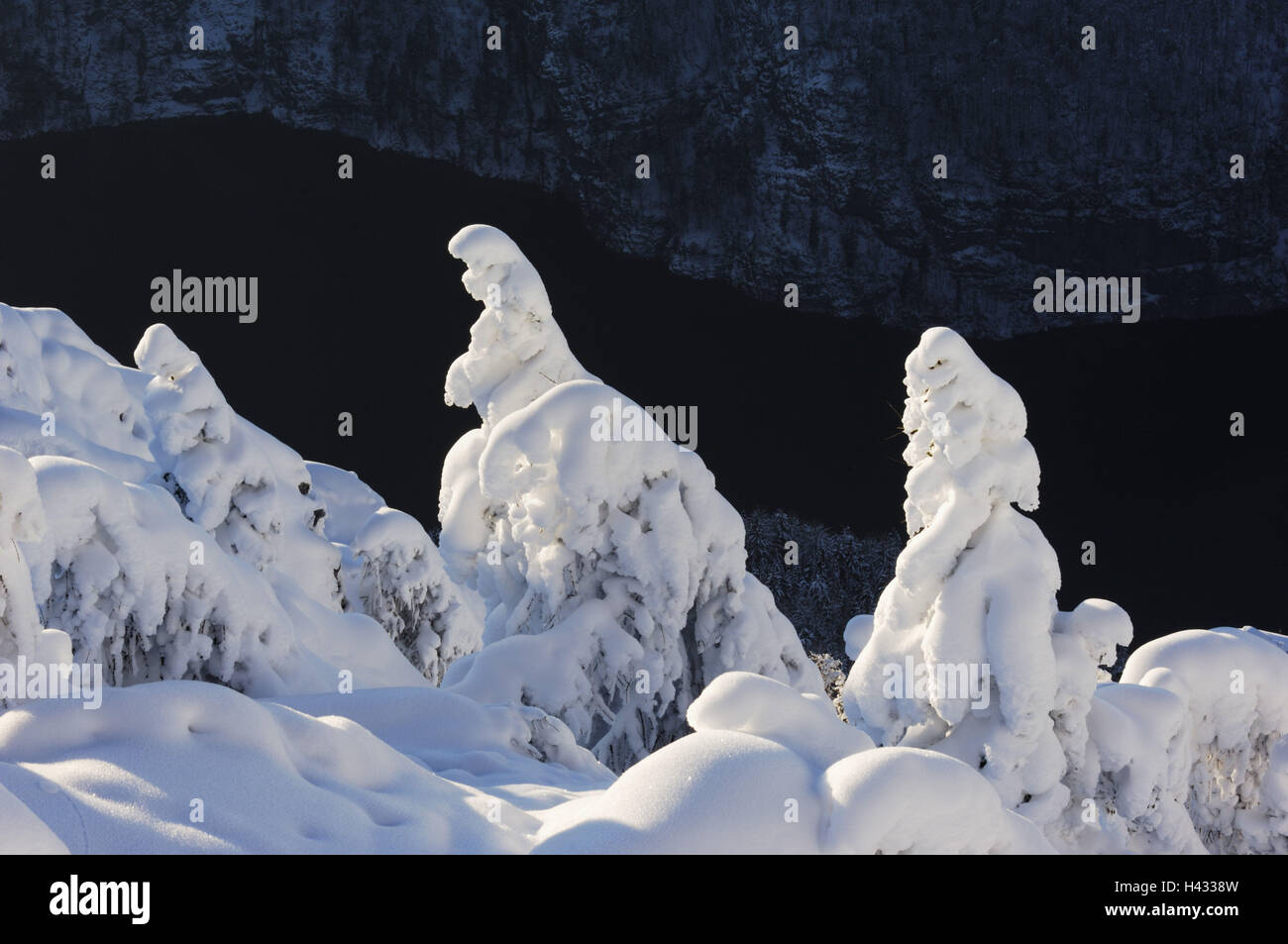 Germany, Berchtesgaden, Jenner, conifers, snowy, the Königssee, winter scenery - Stock Image