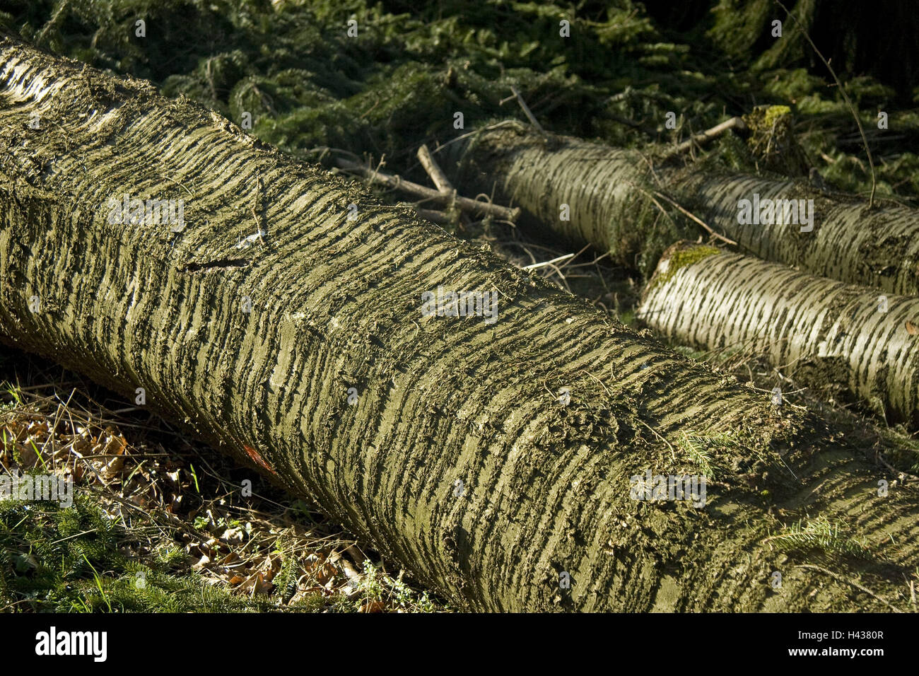 Forest floor, conifer, likes, detail, strain, wood, tree, trunk, lie, crust, crust structure, tree bark, bark, twigs, - Stock Image