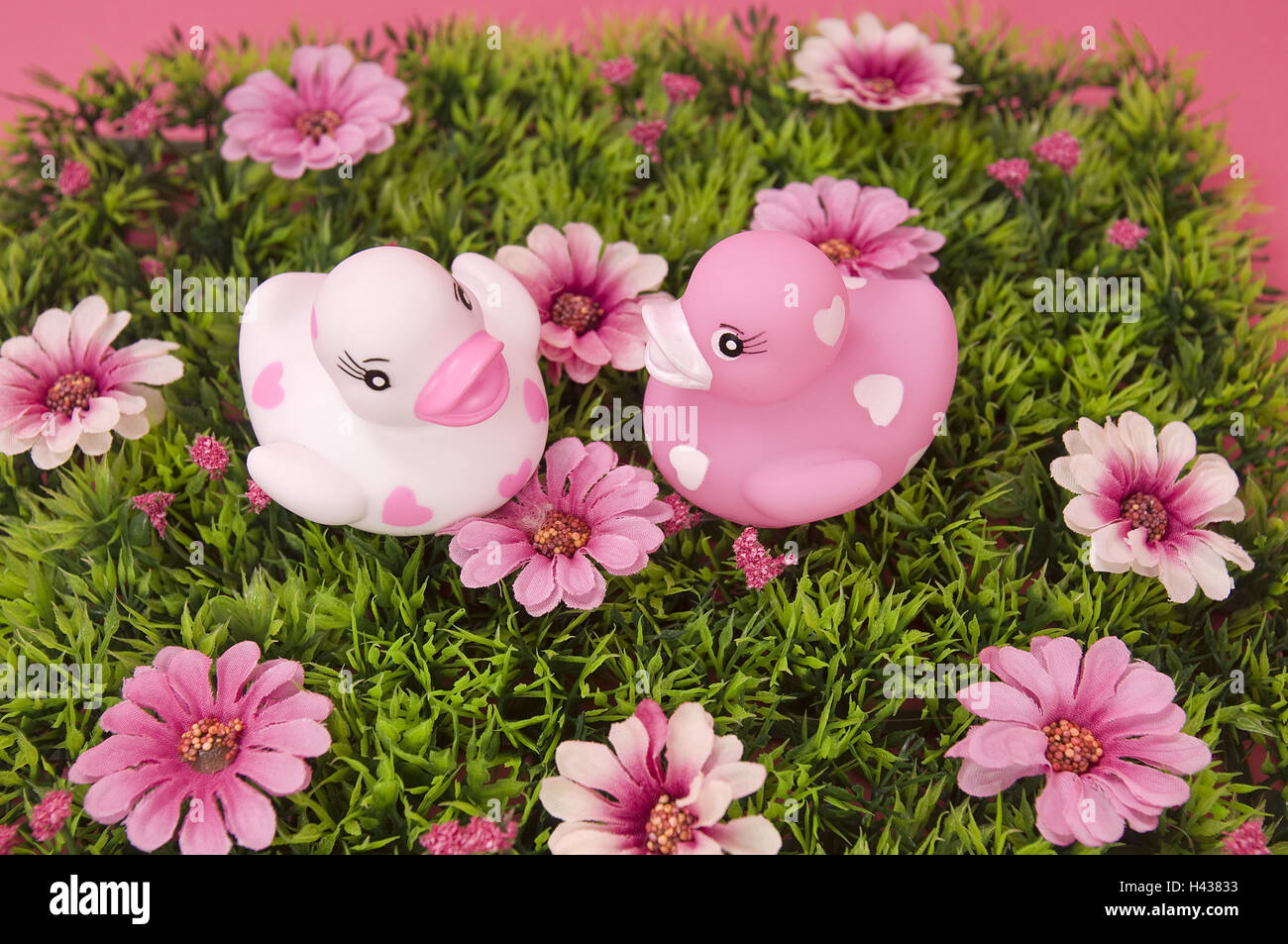 Meadow Pink Stock Photos Meadow Pink Stock Images Alamy