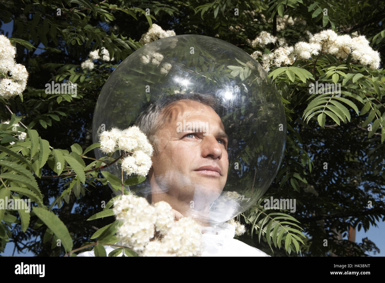 Garden, shrub, blossoms, man, head, glass ball, icon, allergy, protection, isolation, model released, people, defence, - Stock Image